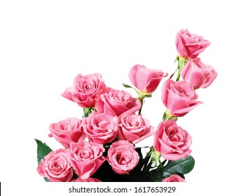Pink Roses Flower Bunch Isolated White Background