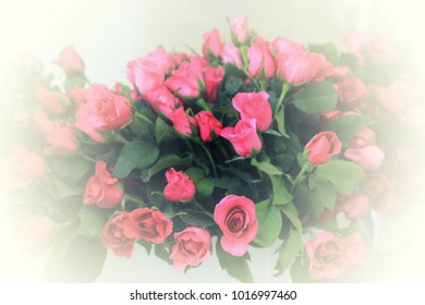 Pink roses flowers bouquet with blurred white circle around.