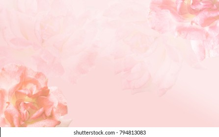 Pink roses frame  blooming flowers festive background,pastel and soft bouquet floral.