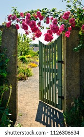Pink roses hanging over open garden gate entrance