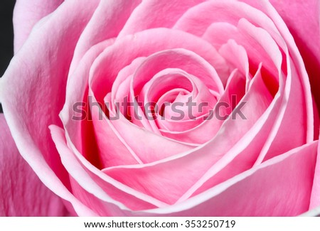 Pink Roses Have Come Mean Joy Stock Photo Edit Now 353250719