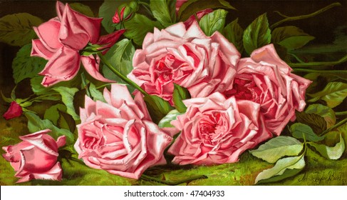 Pink Roses - 'La France Roses' - an 1894 chromolithograph of an 1893 painting by Annie Taylor Burt