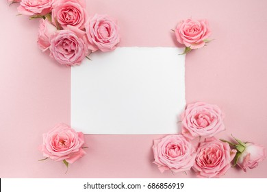 Pink roses on pink background with space for text. Top view