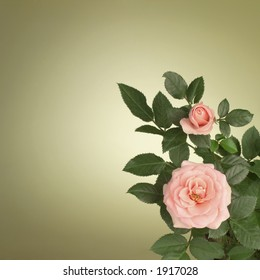 Pink roses on green background