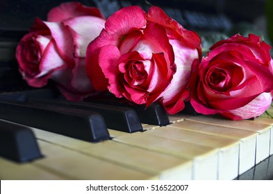 Pink roses on vintage piano keyboard.Love of music or romantic concept.Selective focus.Copy space.