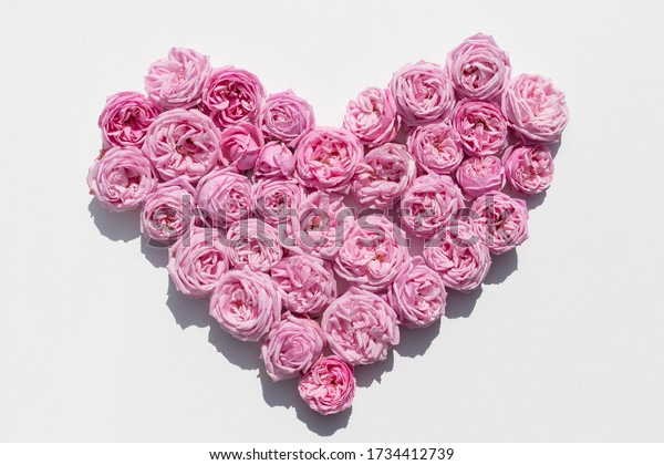 pink-roses-on-white-background-600w-1734
