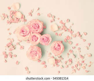 Pink roses over pastel background