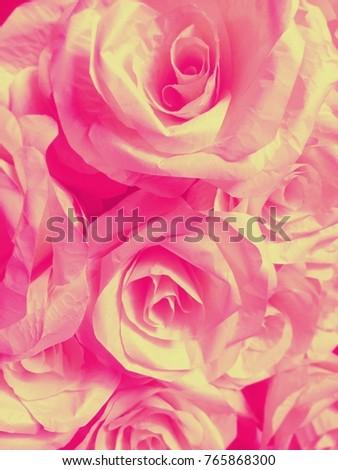 Pink Roses Representation Beautiful Sweet Meaning Stock Photo Edit
