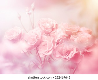 Pink roses in soft color, Made with blur style for background