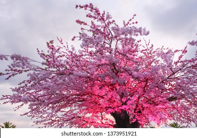 Pink sakura blossom tree, Fake flower with pink lighting uplight