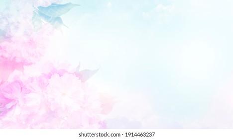 pink sakura flowers close up and light bokeh