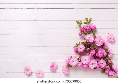 Pink sakura flowers   on white  painted wooden planks. Selective focus. Place for text. Top view.