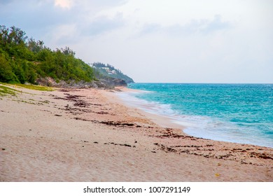 Pink sands of a beach in Bermuda with seaweed