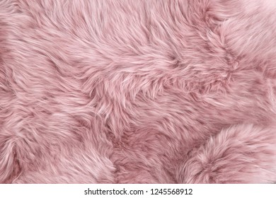 Pink sheep fur. Natural sheepskin rug background texture