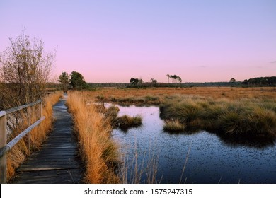 Pink skies over Thursley Heath as the sun sets in Surrey, England