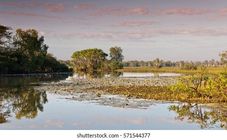 Pink skies reflected in the Kakadu wetlands in Kakadu National Park, Northern Territories, Australia