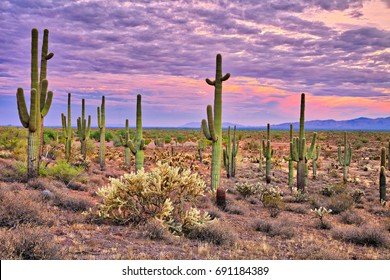 Pink Sky at sunset, in Sonoran Desert near Phoenix.