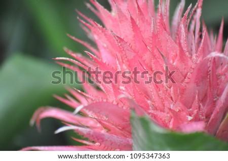 Pink Spiky Flower Stock Photo Edit Now 1095347363 Shutterstock