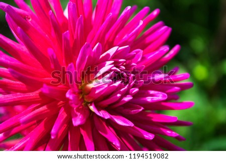 Pink Spiky Flower Stock Photo Edit Now 1194519082 Shutterstock