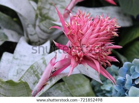 Pink Spiky Flower Stock Photo Edit Now 721852498 Shutterstock