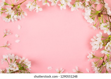 Pink spring background of white cherry blossom flowers making a frame. Flat lay