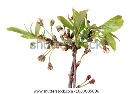 Pink Spring Flower Buds On Branches Stock Photo Edit Now
