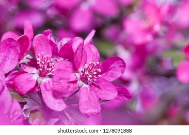 pink spring flowers background