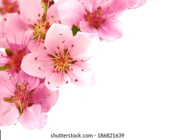 Pink spring flowers border
