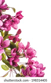 Pink spring flowers border isolated on white background