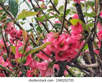 pink spring flowers on a tree as a background