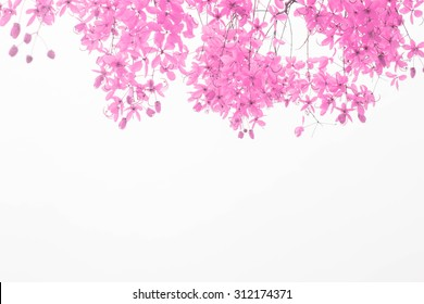 Pink spring flowers on a white background