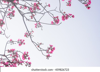фотообои Pink spring flowers on a white background or artificial flowers on greeting card background.
