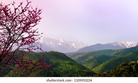 pink spring utopia, wide vista view