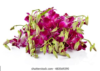 pink stripy phalaenopsis orchid isolated on white background.