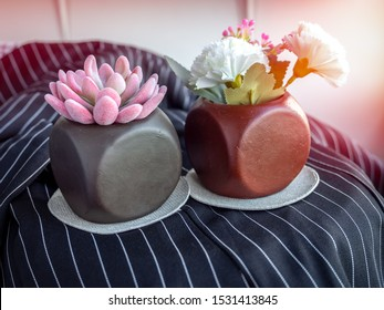Pink succulent plant and flowers in modern geometric concrete planters on black fabric background. Beautiful painted concrete pots.