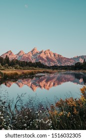 Pink Sunrise on the Teton Range of the Rocky Mountains. Schwabacher Landing in Grand Teton National Park, Woming, USA. Water reflections of Tetons on the Snake River. Blurred flowers in foreground.