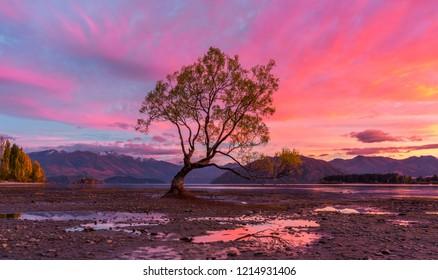 Pink Sunrise at the Wanaka Tree, Wanaka New Zealand