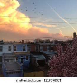 Pink sunset with birds and magnolia over rowhouses