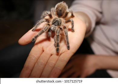 a pink tarantula is sitting on the hand of a woman