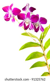 pink thai orchids flowers.(This image contain clipping path)