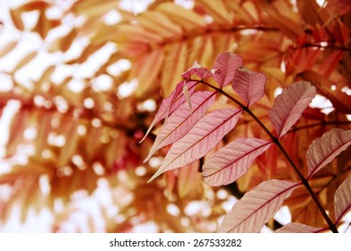Pink transparent leaves background. Fragile nature concept. Selective focus. Blur and bokeh.