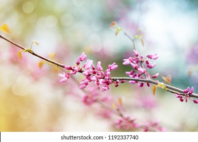 Pink tree blossom in the garden. Beautiful spring.
