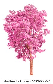 pink tree isolated on white background