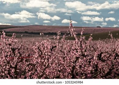 pink tree landscape