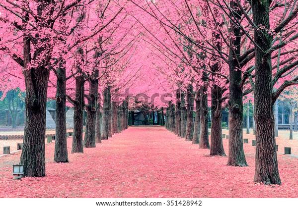 Pink tree,Nami Island in Korea