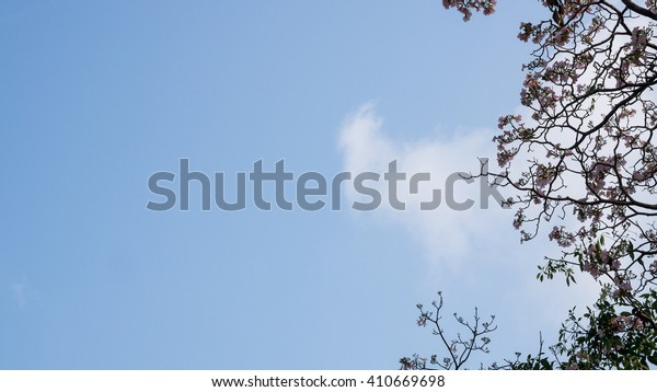 Pink Trumpet flowers with blue sky background
