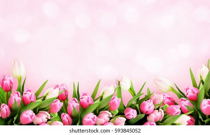 Pink tulip flowers border on holiday background