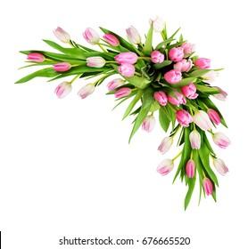 Pink tulip flowers corner arrangement isolated on white