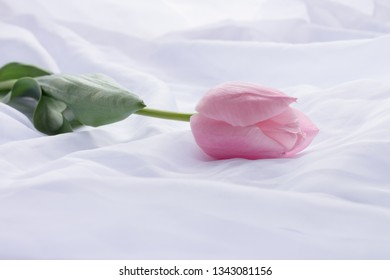 Pink tulip laying on white linen as a background