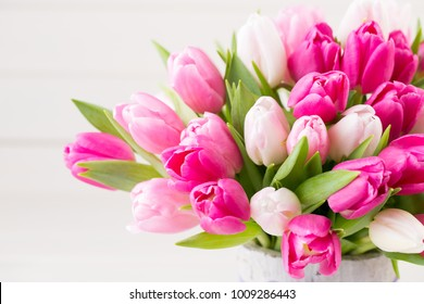 Pink tulip on the white background. Easter and spring greeting card.